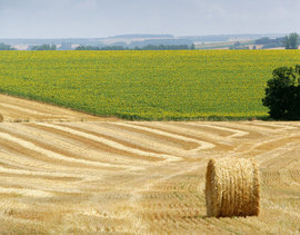 Energía eólica y biomasa en Asturias